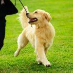 ダニの被害に遭ってる犬の症状とは?この傾向がでたら病院で飲み薬をもらってダニ・ノミ駆除を1