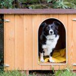 内犬(家の中で飼う犬)はダニ対策しやすいけど、外犬(外で飼う犬)のダニ予防はどうすればいいの?
